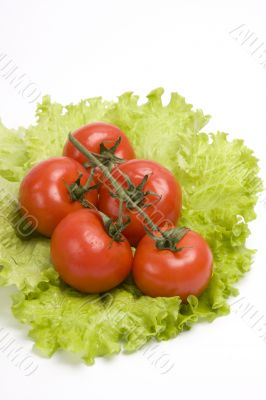 Branch of cherry tomato on leaf lettuce.