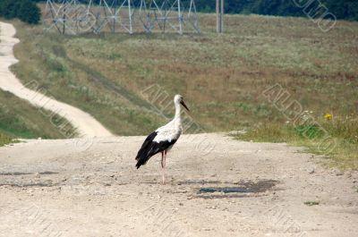 crane at liberty