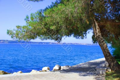 Sea and pine landscape