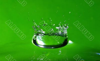Water drop and splash on the fresh green shoot.