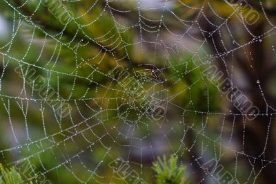 water drops on spiderweb