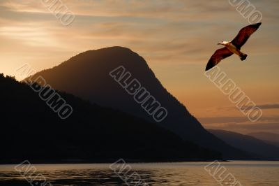 Bird flying above a lake