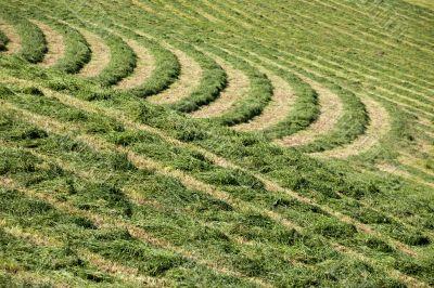hay grass pattern