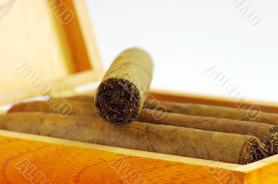 cigars texture. Cigars in box.