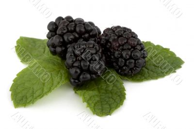 Blackberry on peppermint sheet