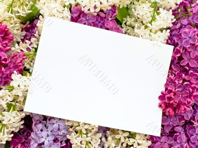 lilac background with invitation