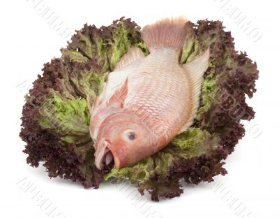 Fish Tilapia on salad