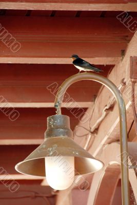 Swallow on torch