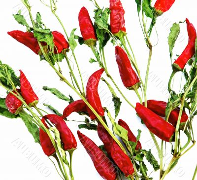 Dry red hot chilly peppers backgrounds