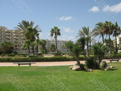 leafy palm trees under the hot sun of Majorca