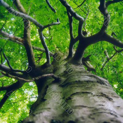 Green Lung