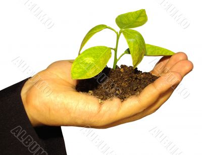 small plant in hand 10609