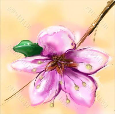 Flower of sakura