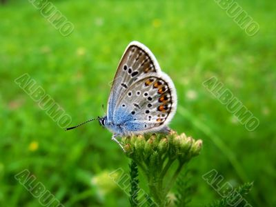 elegant and particolored butterfly on the flower