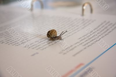 Snail crawling across a document