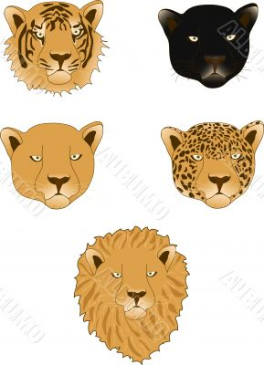 Lion, panther, leopard, tiger and lioness