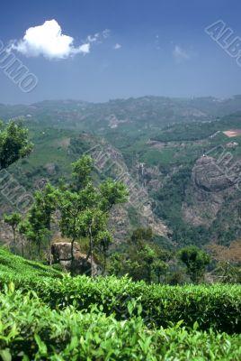 Blue Mountains,India