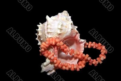 cockle-shell with coral