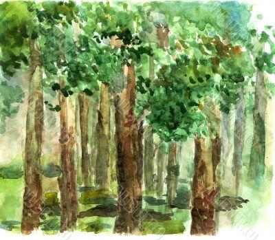 shady grove watercolor