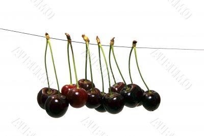 hanging cherries