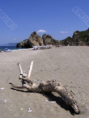 Log At Sandy Beach