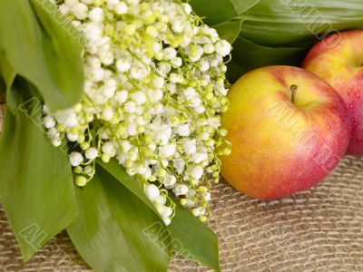 With love. Still-life. lily of the valley and apple on the burla