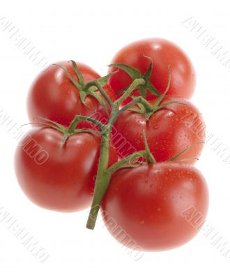 fresh tasty tomatoes on white background with clipping path