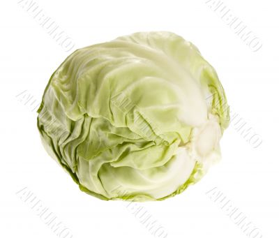 fresh tasty cabbage on white background. with clipping path