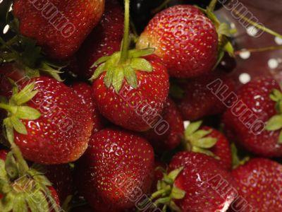 fresh tasty strawberry on to  colander