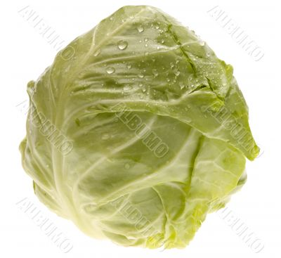 fresh cabbage. isolated with clippind path