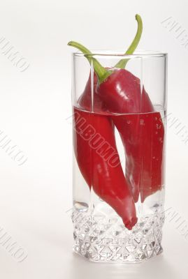 Russian Vodka with red hot chilly pepper in the glass