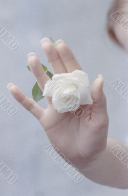 Woman`s Hand with White Rose
