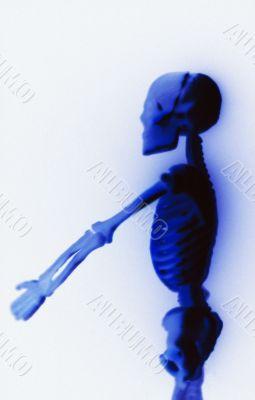 Human Skeleton on white