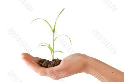 precious plant