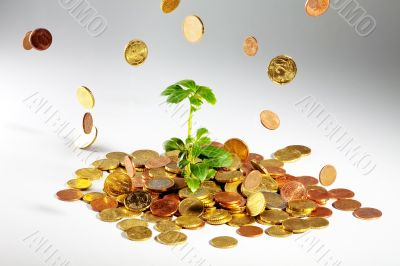 Growing tree on coins