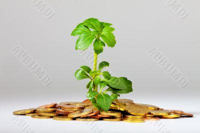 Growing Tree on a heap of money