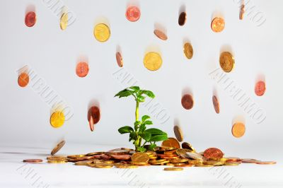 Plant with falling coins
