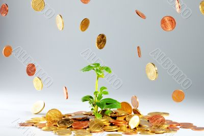 Growing plant on coins