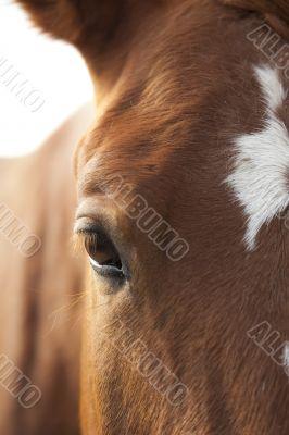 Horse`s Eye
