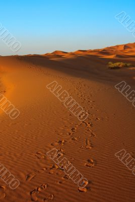 sunset over Sahara desert