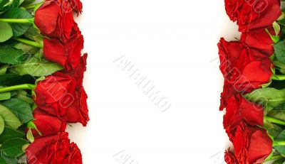 red roses border