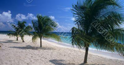 Saona island beach Dominican republic