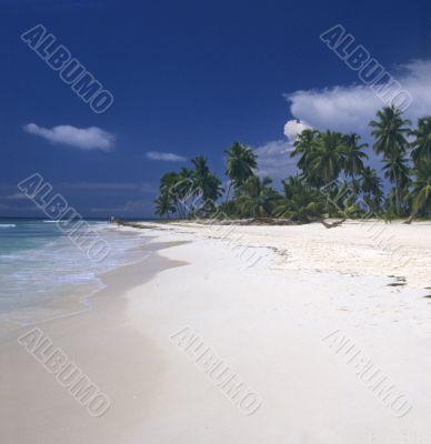 Saona island beach- Dominican republic