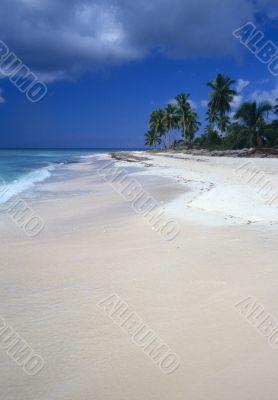 Saona island beach - Dominican republic