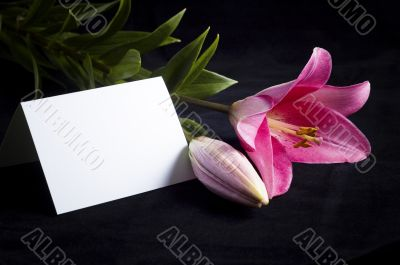 pink lily and postcard