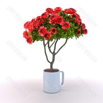 Rosebush grow from cup