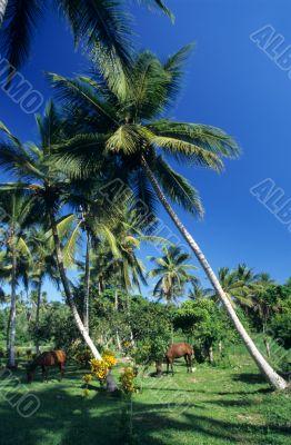 Palmtree garden with horses