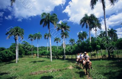 Horse riding in palm trees landscape - Dominican republic
