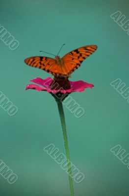 A delicate butterfly over a flower Dominican republic
