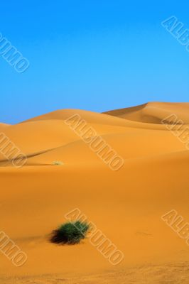 sand dunes and a lonely tuft of grass